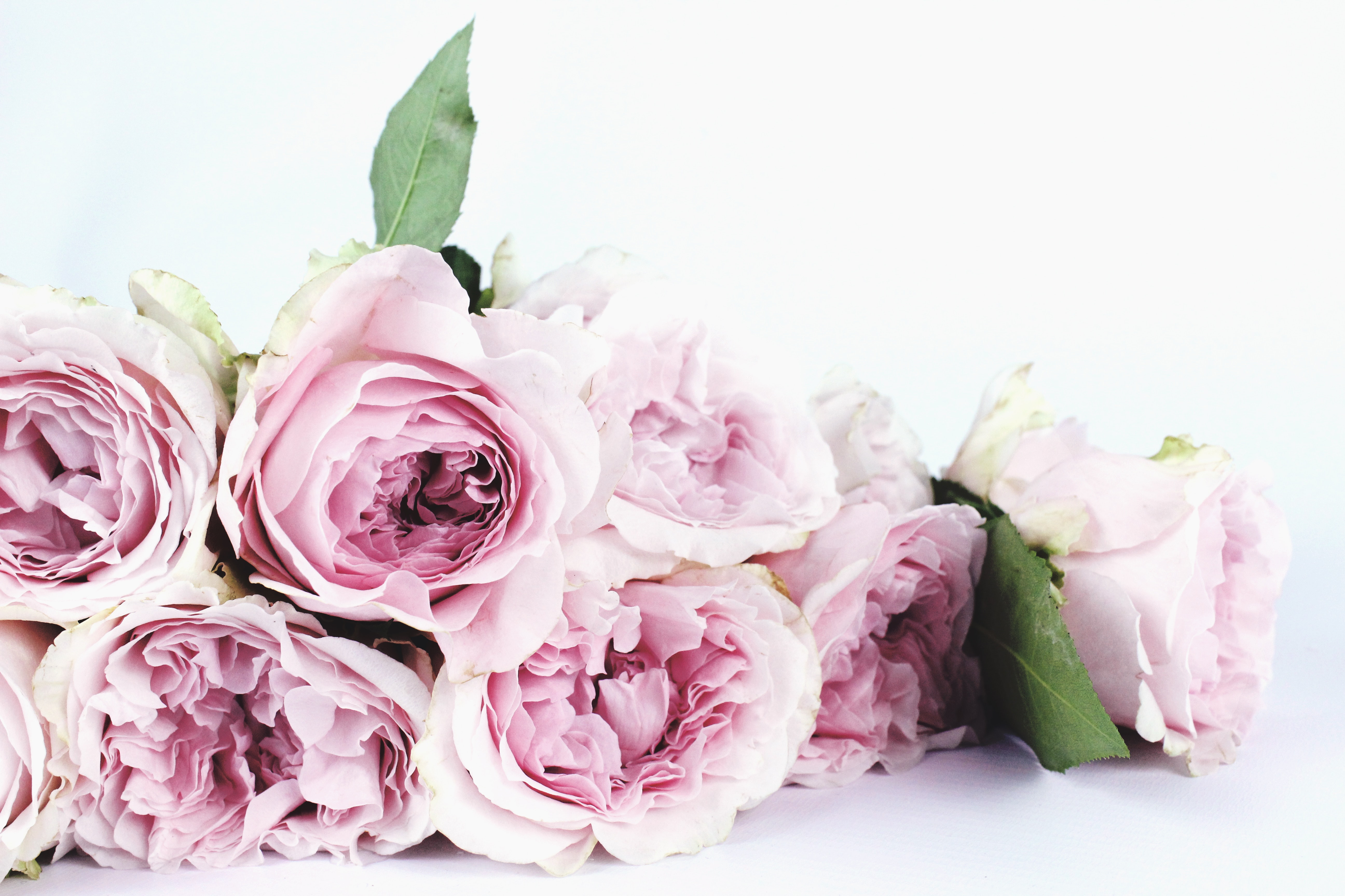 pink roses for beautiful decor