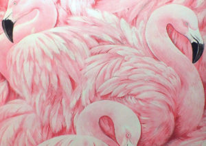 flamingos coverpage