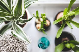 Matching Sustainability And Mental Health At Home